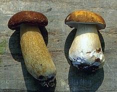 پاورپوینت طرح توجیهی پرورش قارچ خوراکی